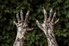 Fasa- och allhelgonaaftontema: Ruskiga levande dödhänder som är smutsiga med svart, spikar räckvidder för gröna sidor som går död royaltyfri foto