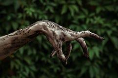 Fasa- och allhelgonaaftontema: Ruskiga levande dödhänder som är smutsiga med svart, spikar räckvidder för gröna sidor som går död royaltyfria bilder