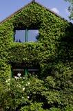 Fasad av ett hus som täckas med murgrönan Royaltyfri Bild