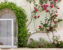 Fasad av historisk byggnad som täckas av murgrönan och rosor Royaltyfria Bilder