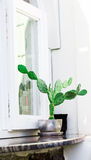 Fasada dom z roślinami Santorini Grecja Zdjęcia Royalty Free