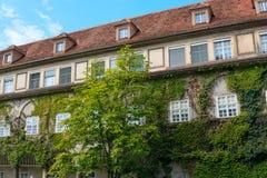 Fasada Europejski stary dom przerastający z zielonym bluszczem obrazy stock