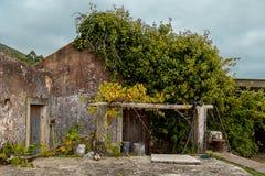 Fasada Jeden Wiejski dom, Prawie Zakrywająca Z roślinami fotografia stock