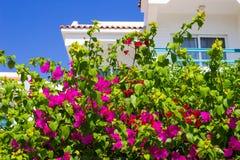 Fasaden av hotellet med balkonger och fönster dekorerade med blommaSharm el Sheikh, Egypten Royaltyfria Foton