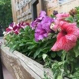 fasadgarnering med nya blommor Arkivbilder