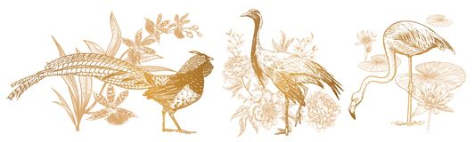 Fasan och orkidé, kran och pioner, flamingo och näckros vektor illustrationer