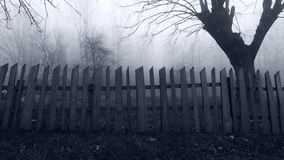Fasaplats av Misty Forest royaltyfri bild