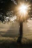 Fasci luminosi di mattina Immagine Stock