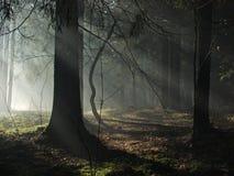 Fasci luminosi oscurità entrante Fotografia Stock Libera da Diritti