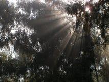 Fasci solari. fotografia stock libera da diritti