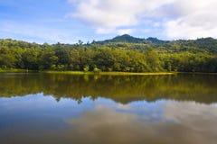 Fascia della foresta con il lago Immagine Stock Libera da Diritti