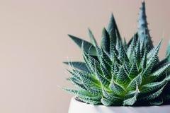 Fasciata di haworthia ed aloe succulenti vera in un vaso su fondo di marmo bianco Piante alla moda e semplici per lo scrittorio m Fotografie Stock