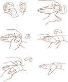 Fasciatura della mano Immagine Stock