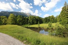 Fascinar, tipos do grande-formato de prados verdes, bordas e as madeiras alpinas os montes no verão fotos de stock royalty free