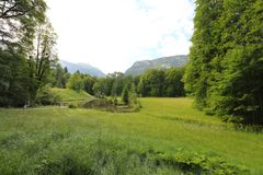 Fascinar, tipos do grande-formato de prados verdes, bordas e as madeiras alpinas os montes no verão imagem de stock royalty free