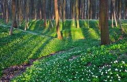Fascinated лес с белыми цветками Стоковое Изображение RF