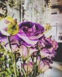 Fascinated пурпур стоковые изображения