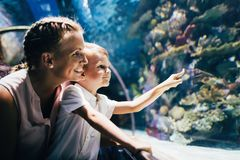 Mother and son watching sea life in oceanarium Stock Image