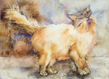 Fascinated que mira el gato de pelo largo Imagen de archivo libre de regalías