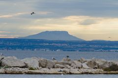 Flying bird above the rocks. Fascinating blue sky and a flying bird above rocks and blue colored mountain Royalty Free Stock Photos