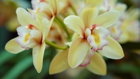 Fascinating close up 4k view on tender bright yellow flowers stock video footage