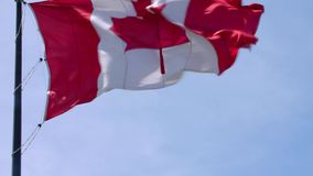 Impressive national symbol Canada flag red white maple leaf banner waving on pole in wind on blue sky sunny background. Fascinating national symbol Canada flag stock footage