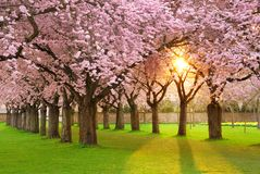 Fascinating springtime scenery Stock Image