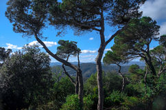 Fascinating view from Tibidabo mountain near Barcelona. Two curved trees in front Royalty Free Stock Images