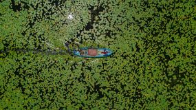 Water lilies and tourist boat. A blue tourist boat in the water full of green lotus or water lily leaves royalty free stock photos