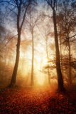 Fascinerande ljus i en dimmig skog Fotografering för Bildbyråer