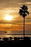 Fascinerende zonsondergang en palm Royalty-vrije Stock Foto