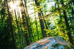 Fascio di Sun nel legno Immagini Stock Libere da Diritti