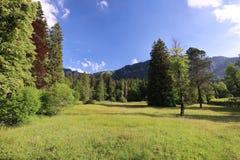 Fascynować, formatów typ zielone łąki, krawędzie i drewna Alpejscy pogórza w lecie zdjęcia royalty free