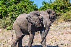 Fascynująca podróż Afryka Fotografia Stock