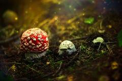 Fase di crescita di fungo Fotografia Stock Libera da Diritti