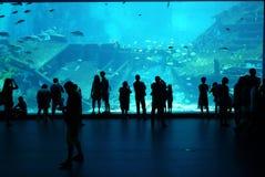 Fase di osservazione dell'acquario del mare di Singapore - 21 febbraio 20 Fotografia Stock Libera da Diritti