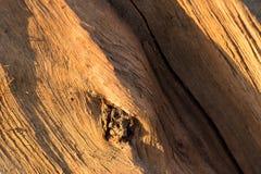 Faser, Ast, Beschaffenheit, Hintergrund, knackte, Baum, Stamm, Kern, Licht, die Kiefer, natürlich, Bruch, Spalte, der Stumpf, nat Stockbilder