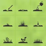 Fases ajustadas do ícone de como crescer uma planta das sementes ilustração do vetor
