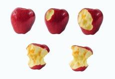 Fases de comer uma maçã Fotos de Stock Royalty Free