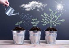 Fases de crescimento da árvore Imagem de Stock Royalty Free