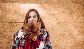 Fashion autumn portrait woman with yellow maple leaves on yellow wooden Background. Pretty woman walking in the Park and. Enjoying the beautiful autumn nature royalty free stock image