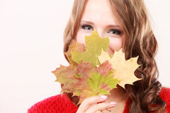 Fashion autumnal girl with maple leaves in hand Stock Image