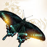 Fashion background with butterfly Royalty Free Stock Photo