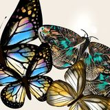 Fashion background with vector butteflies Stock Photos