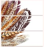 Fashion business cards set with feathers Stock Photography