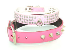Fashion collars dogs Royalty Free Stock Photos