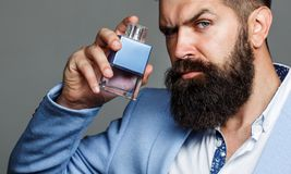 Fashion cologne bottle. Bearded male prefers expensive fragrance smell. Man perfume, fragrance. Male fragrance and. Perfumery, cosmetics. Masculine perfume royalty free stock image