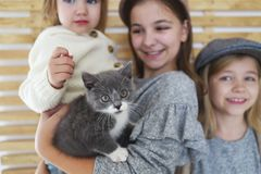 Fashion cute little girls sisters with a British kitten in the arms stock images
