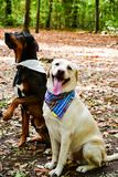 Fashion dogs Royalty Free Stock Image