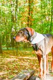 Fashion dogs Royalty Free Stock Photography